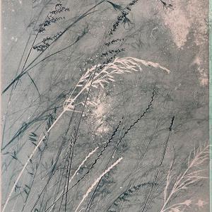 Pink Grasses IV (A04)