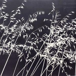 Kasteelberg Grasses V (A06)