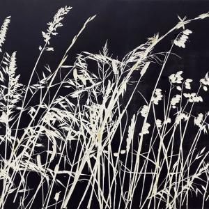 Kasteelberg Grasses I (A08)