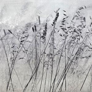 Kasteelberg Grasses IV (A11)