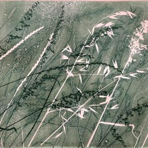 Dusky Grasses II (B13)