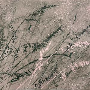 Dusky Grasses VII (B18)