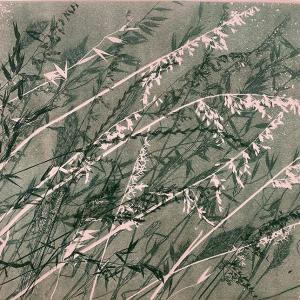 Dusky Grasses IX (B20)