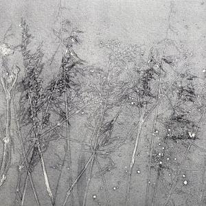 Summer Grasses II (C02)