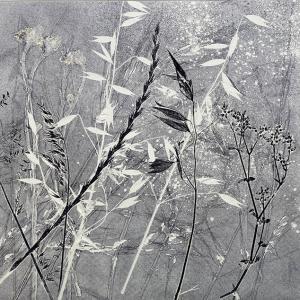 Summer Grasses V (C05)