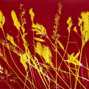 Yellow Grasses IV (D04)