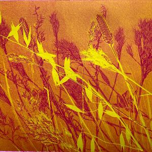 Yellow Grasses V (D05)