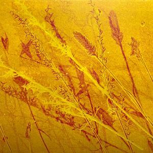 Yellow Grasses VI (D06)