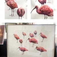 Scarlet Ibis'