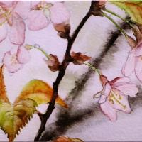 Wild Sakura (detail)